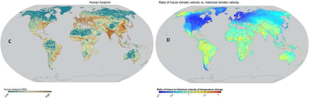 Les régions où se concentrent les espèces rares sont aussi les plus impactées par les activités humaines et celles où le réchauffement climatique est le plus rapide. © Brian Enquist et al, Science Advances, 2019