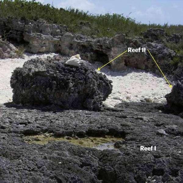 Les coraux (reef) étudiés. Le corail II est plus jeune que le corail I. © Thompson et al. 2011 - Nature Geoscience