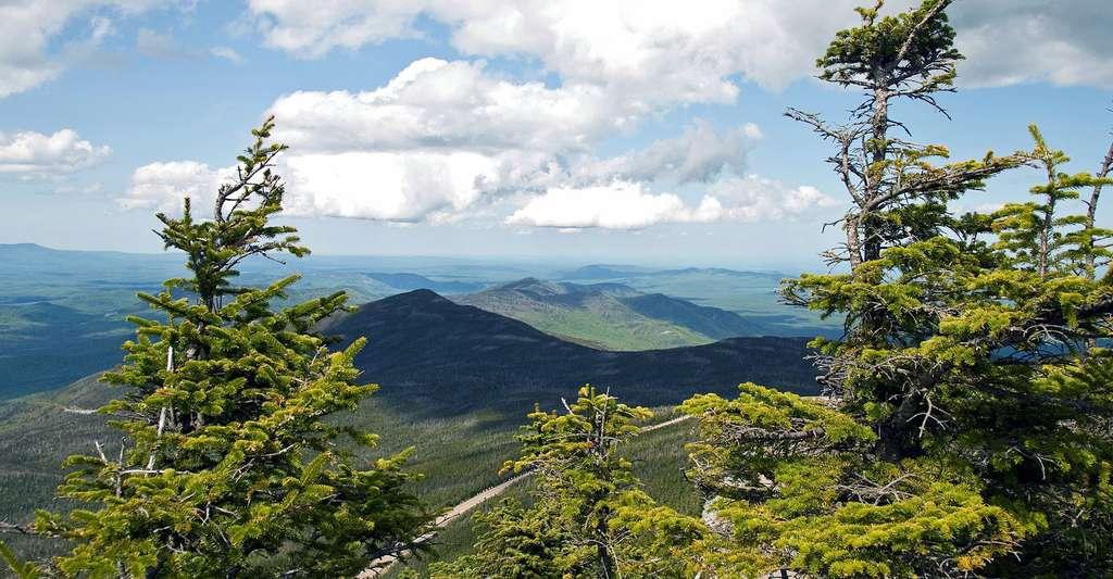 Abies balsamea, Whiteface Mountain, New York, USA. © Tony, CC BY 2.0