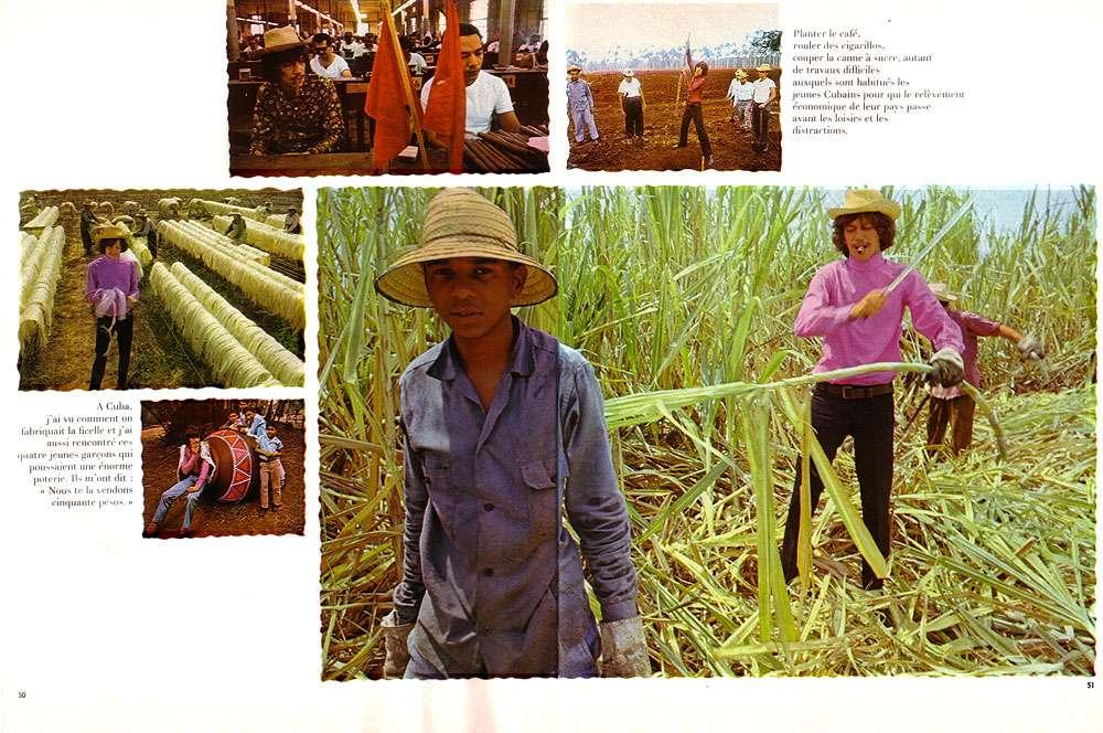 Dans les champs de canne à sucre. © Antoine, DR