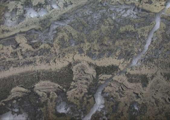 Microphotographie de stromatolites issus de la région de Pilbara (Australie) et vieux de 3,5 milliards d'années. © Université de Nouvelle-Galles-du-Sud