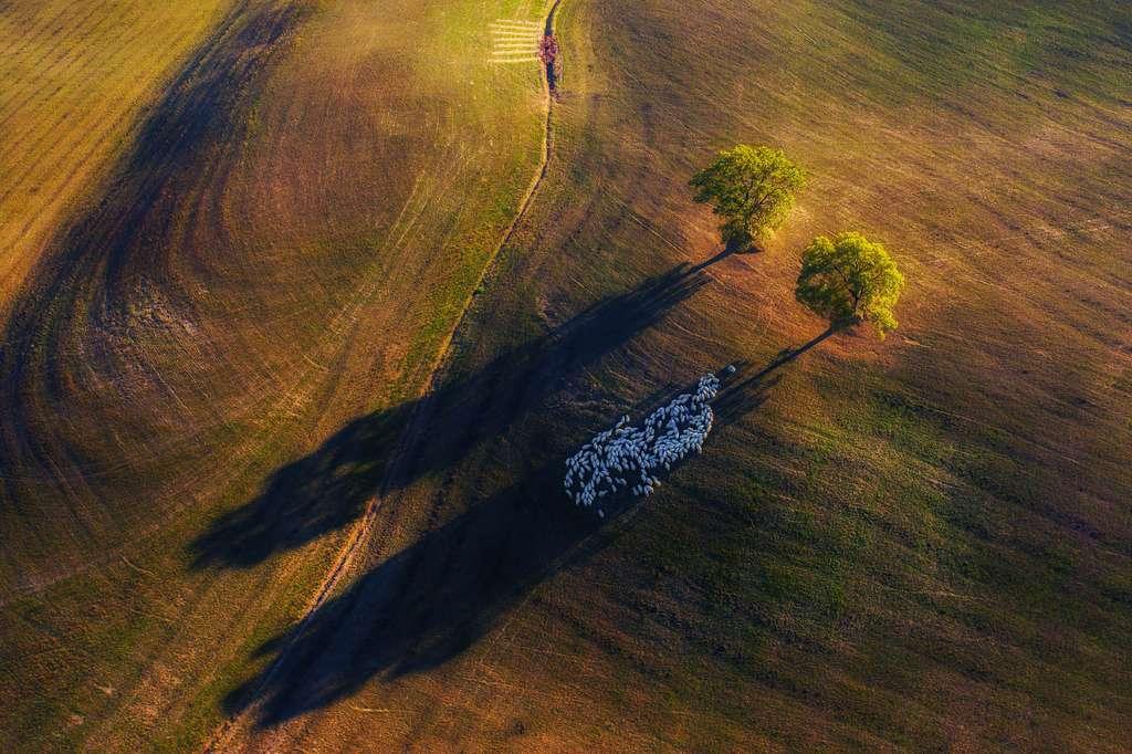 Jeu d'ombres, Italie. © Marek Biegalski, Nature TTL