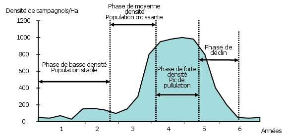 Les populations de campagnols terrestres suivent des cycles qui durent environ six ans. © Ministère de l'Agriculture