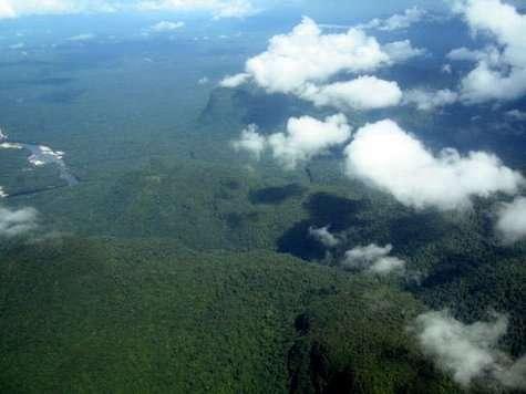 """Les forêts tropicales agissent comme un véritable """"climatiseur"""" de la Terre. Qu'en est-il des autres forêts ?"""