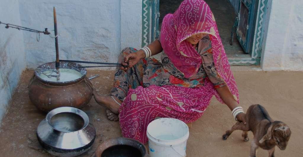 Une femme bishnoïe barattant le lait, et une jeune chèvre. © Abdel Sinoctou - CC BY-SA 3.0
