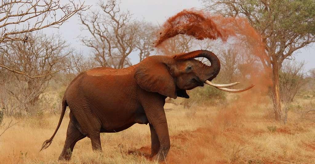 L'éléphant le plus grand animal terrestre. © Kikatani - Domaine public