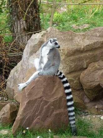 Le lémurien est une des espèces endémiques de Madagascar. © Fangio678, Flickr, CC by-sa 2.0