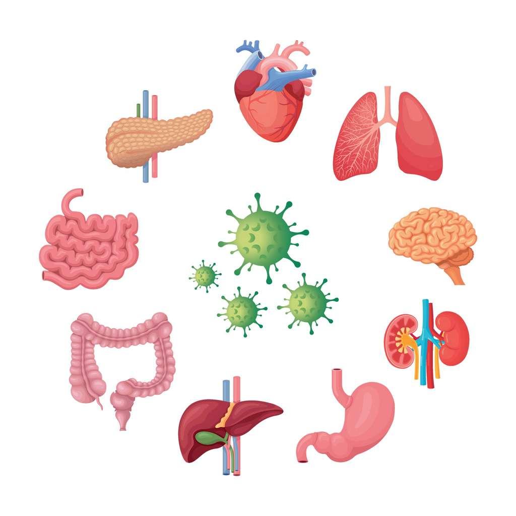 Outre des états de fatigue, des maux de tête persistants, des pertes de mémoire ou encore des douleurs articulaires, l'infection par le SARS-CoV-2 peut causer de multiples dommages aux organes. © Andreas, Adobe Stock