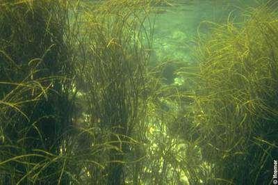 Des articles, des ouvrages et des sites Internet pour tout savoir sur les algues. © Ifremer, O. Barbaroux, DR
