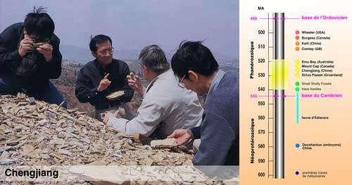 À gauche, en photo, le site de Chengjiang (Chine) ; à droite, les principaux sites à conservation exceptionnelle attestant l'origine précambrienne des métazoaires et leur radiation majeure au Cambrien inférieur (explosion cambrienne : entre il y a 540 et 520 millions d'années). © DR