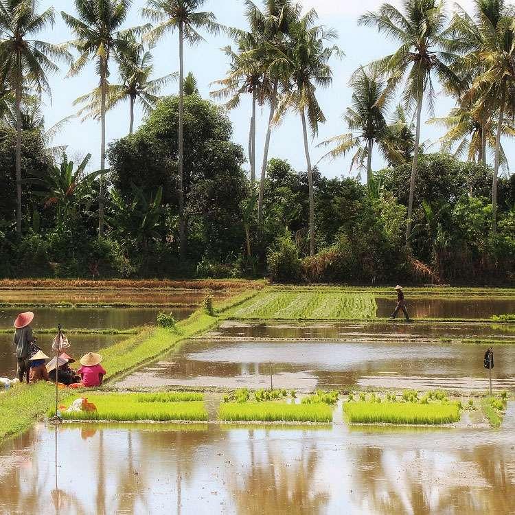 Rizières à Bali, en Indonésie. © Inmemo, Pixabay, DP