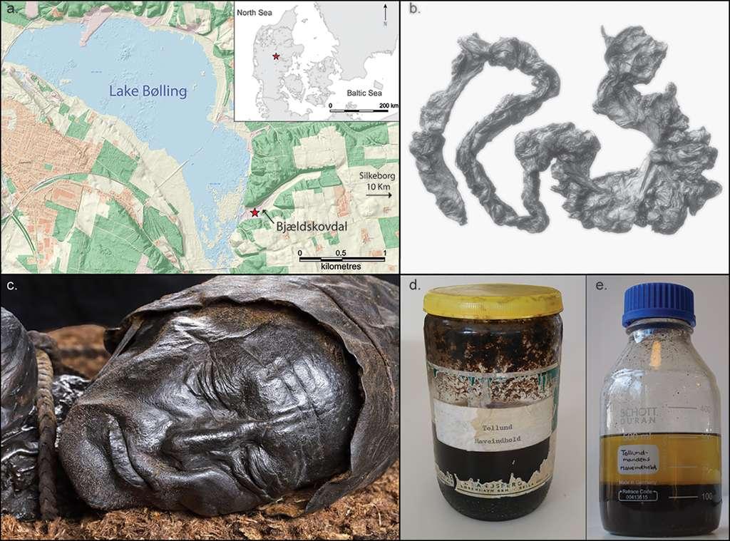 L'homme de Tollund a été découvert à Bjældskovdal et le contenu de son intestin a été analysé par l'équipe de chercheurs danois. © Nieslen et al, 2021