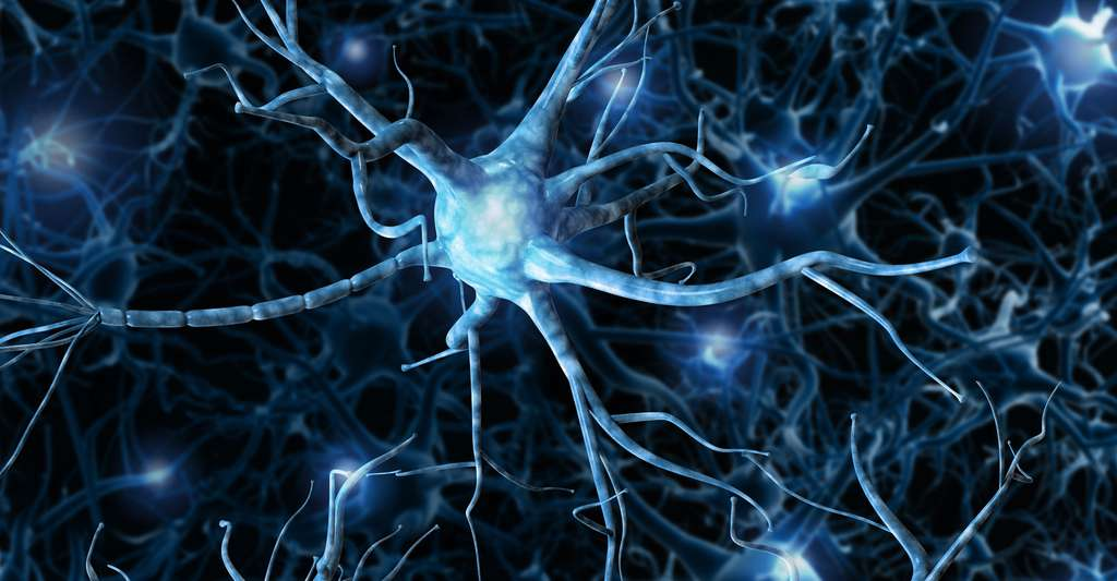 Dégénérescence des circuits cérébraux. © Romanova Natali - Shutterstock
