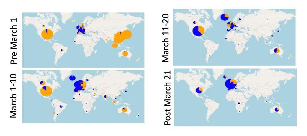 La mutation G614 (en bleu) s'est répandue à vitesse fulgurante durant le mois de mars, prenant le dessus sur la souche originale de Wuhan (orange). © Bette Korber et al, bioRxiv, 2020