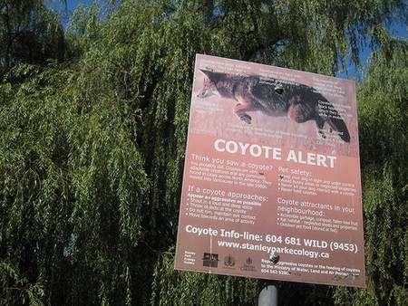 « Vous avez vu un coyote ? Voilà quoi faire ! » © Phillie Casablanca CC by-sa