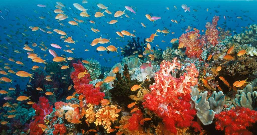Le corail, un habitat unique et menacé