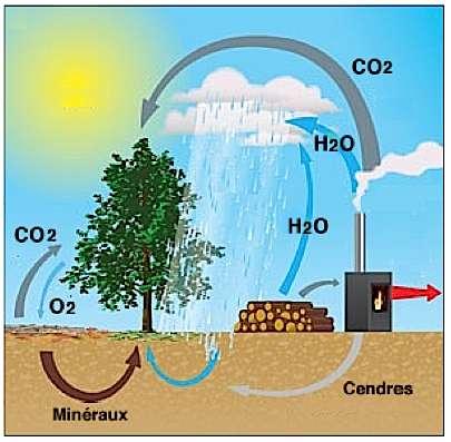 D'un point de vue environnemental, le bois fournit un combustible économique, renouvelable et au bilan carbone neutre. À la différence des énergies fossiles, l'accroissement forestier permettrait de compenser par la photosynthèse les émissions de CO2 issues de la combustion. © Dalkia.com