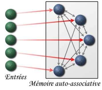 Exemple d'une architecture d'une mémoire auto-associative linéaire