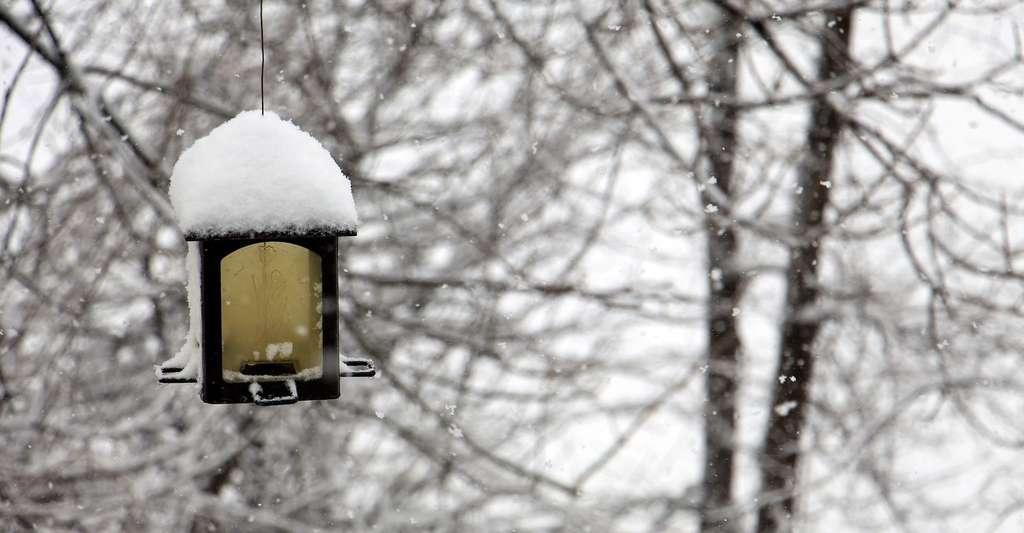 En hiver, une mésange peut perdre jusqu'à 10 % de son poids en une seule nuit. Trouver des graines dans une mangeoire peut donc l'aider à subsister lorsque le climat est rude. © PGloutnay, Pixabay, DP