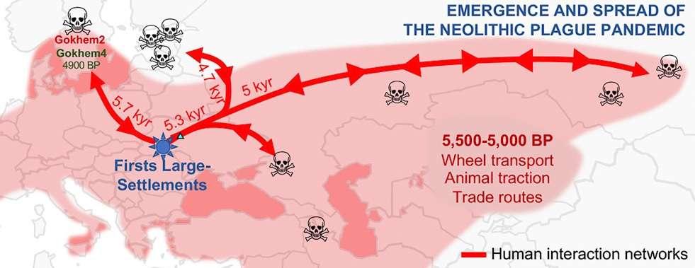 Modélisation de l'expansion de la peste au Néolithique. © Rascovan et al 2018, Cell
