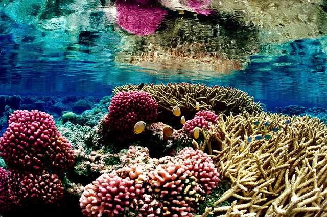 Récif corallien de l'atoll de Palmyra, au centre de l'océan Pacifique. Ces milieux très sensibles au réchauffement climatique abritent une grande biodiversité marine. © Jim Maragos, U.S. Fish and Wildlife Service