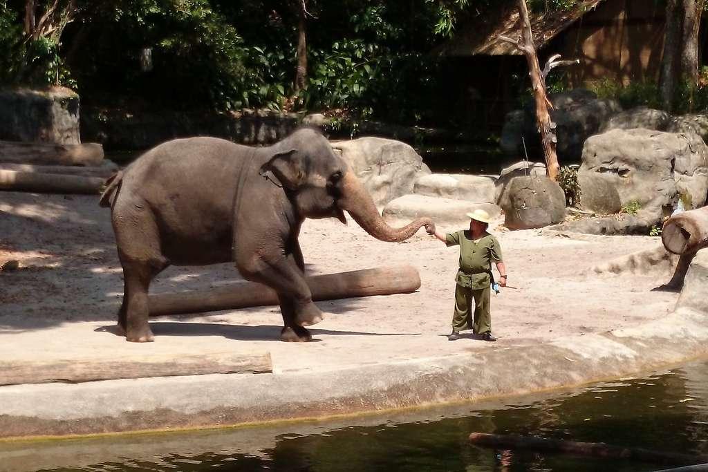 Les éléphants dans les zoos ont une activité physique similaire à celles de leurs congénères en liberté. © Benjamin Ho, Flickr