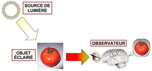 La perception de la couleur d'un objet fait intervenir trois éléments : la source de lumière (caractérisée par son spectre), l'objet (qui renvoie une lumière dont la composition spectrale est différente de celle de la source), et l'observateur (œil et cerveau). © Bernard Valeur, DR