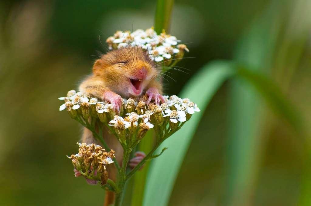 Un loir italien très heureux. © Andrea Zampatti, Comedy Wildlife Photography Awards