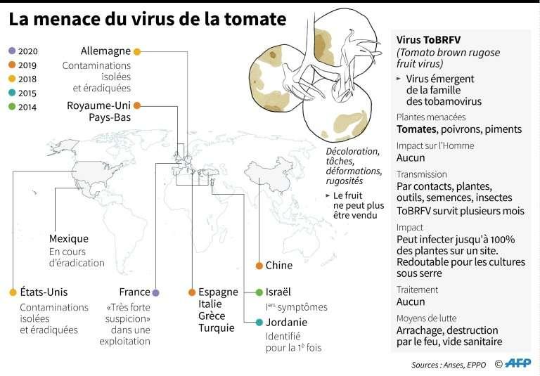 Le virus ToBRFV a été observé pour la première fois en Israël en 2014. Un premier cas vient d'être confirmé en France dans le Finistère. © Alain Bommenel, AFP