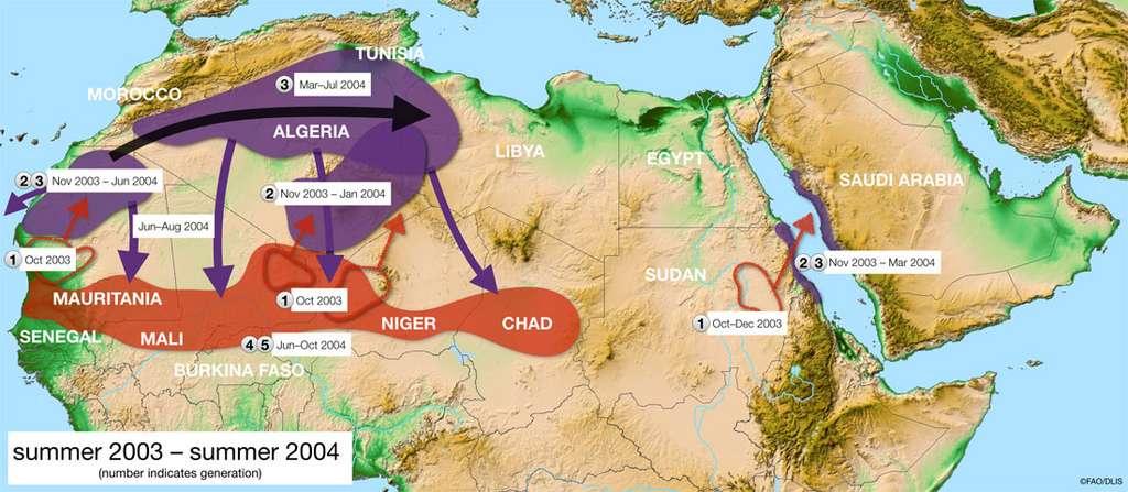 Quatre résurgences non traitées se sont simultanément développées à la fin de l'été 2003 en Mauritanie, au Mali, au Niger et au Soudan. Des pluies exceptionnellement bonnes sont tombées fin octobre sur une très vaste zone s'étendant de Dakar aux monts Atlas, au Maroc. Le Sahara occidental a reçu plus de pluie en un jour qu'en un an. En conséquence, les conditions écologiques sont restées favorables pendant plus de six mois, permettant deux générations de reproduction et donnant lieu à une recrudescence de criquets. Les essaims ont envahi l'Afrique du Nord-Ouest et s'y sont reproduits au printemps. Les essaims issus de la reproduction printanière ont ensuite envahi le Sahel d'Afrique de l'Ouest, du Cap-Vert au Tchad. Deux autres générations ont eu lieu pendant l'été 2004, résultant en davantage d'essaims. © FAO