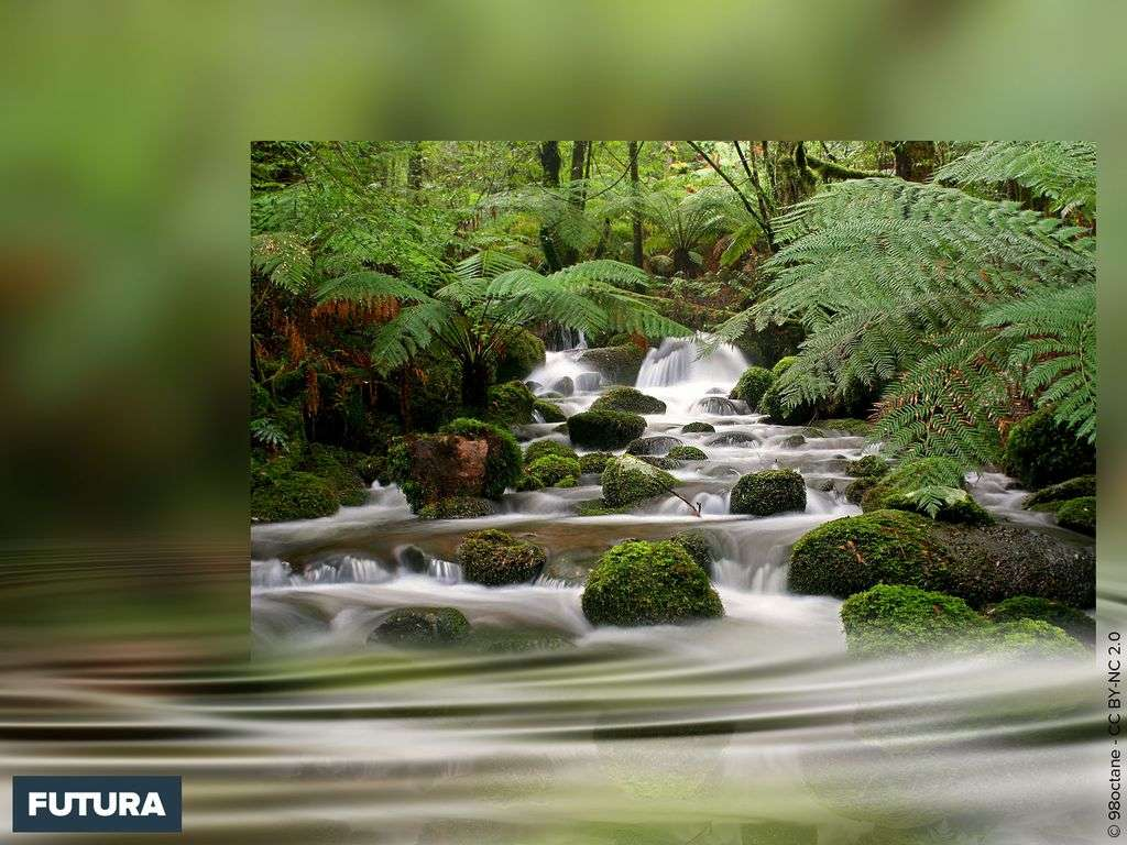 Cement Creek - Yarra Ranges National Park, Victoria