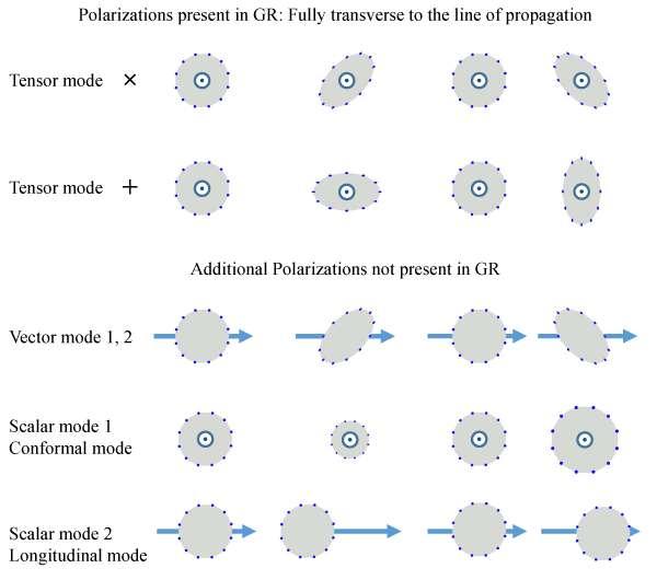 Les ondes gravitationnelles peuvent posséder différentes polarisations selon qu'elles sont décrites par les équations de la relativité générale ou des extensions de ces équations. La polarisation peut être mise en évidence par le passage des ondes gravitationnelles à travers une distribution initialement circulaire de masses. L'effet dans le temps des deux modes de polarisation (× et +) des ondes de la théorie d'Einstein est représenté en haut sur ce schéma. La direction de propagation des ondes est perpendiculaire au plan du schéma. En bas, trois autres modes sont figurés, la flèche indiquant la direction de propagation. Les modes B sont les modes scalaires de type 1. © Claudia de Rham