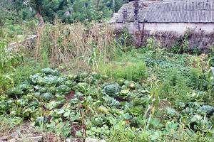 La disposition des plantes d'un potager peut s'organiser en fonction des besoins en eau. © O. Mourot CC by-nc-nd 3.0