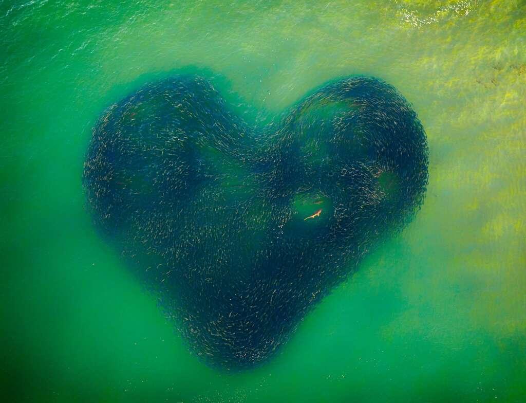 Chasse en cœur, Australie. © Jim Picôt, Drone Photo Awards
