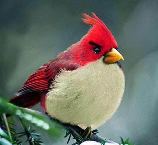 Le vrai Angry Bird