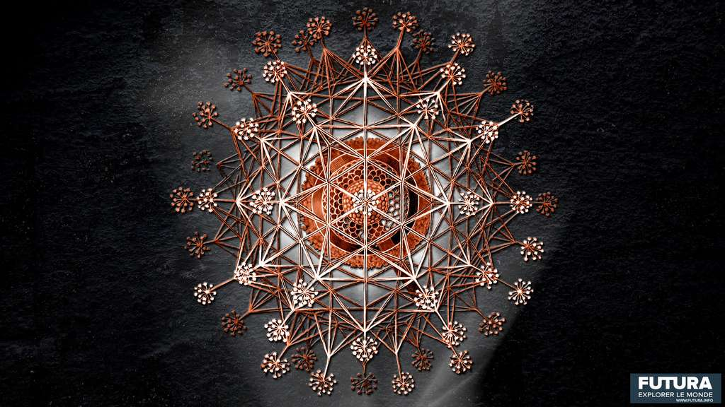 Sagenoscena stellata. © Ernst Haeckel, Wikimedia commons, DP