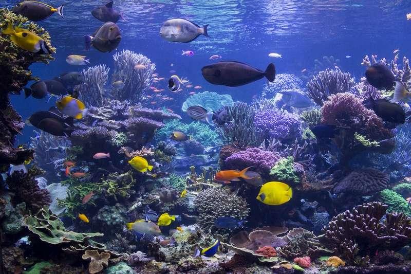 Les thermostats connectés des aquariums sont désormais des cibles potentielles pour les pirates. © Anthony, Fotolia