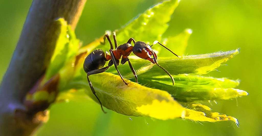 En hiver, les fourmis se rassemblent au plus profond de leur fourmilière et rentrent en léthargie. © diego_torres, Pixabay, CC0 Creative Commons