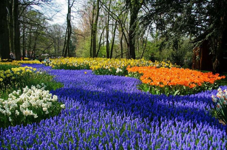 Le parc floral de Keukenhof, aux Pays-Bas
