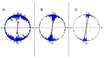 Résultats des orientations relevées pour la vache (en A), le chevreuil (B) et le cerf élaphe (C). Les lignes noires donnent l'orientation moyenne et les triangles les moyennes observées dans différentes régions du monde. © Sabine Begal et al.