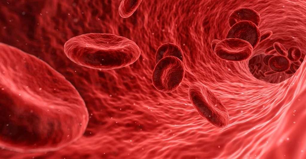 Pression sanguine. © Qimono, Pixabay, DP