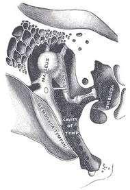 La chaîne des osselets. À gauche, la membrane du tympan. Au centre : malleus (marteau), incus (enclume) et stapes (étrier). À droite, le vestibule. © Wikipedia, « Gray's antomy », domaine public