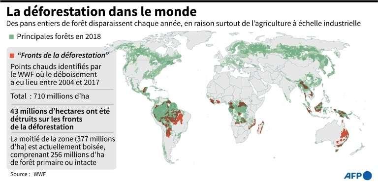 La déforestation dans le monde. © John Saeki, AFP