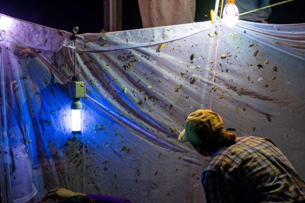 Sur le terrain, l'entomologiste inventorie et recense les insectes d'un lieu précis, lui permettant de recueillir de nombreuses données écologiques sur l'environnement. © peter, Fotolia.