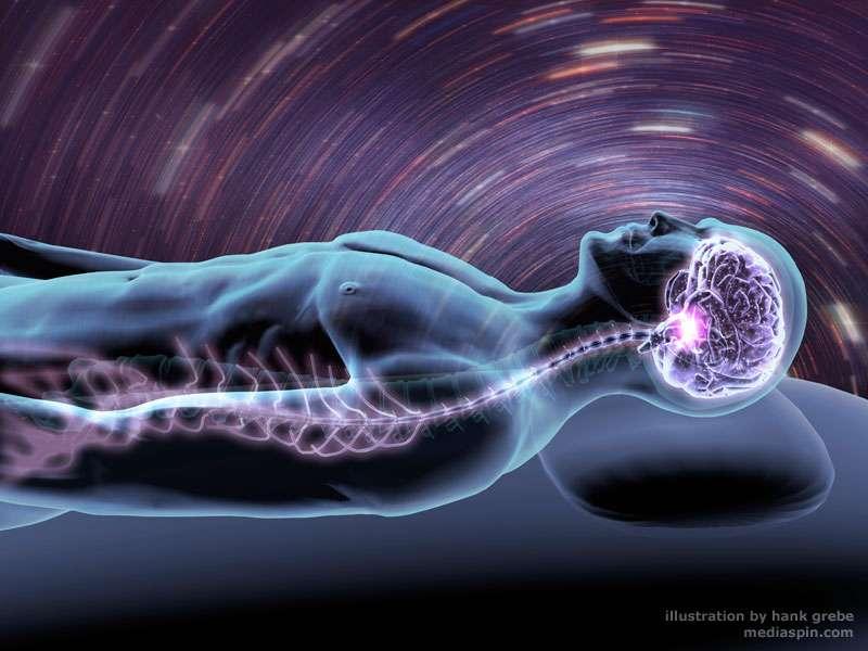 Comment le cerveau forme-t-il les rêves durant le sommeil paradoxal ? © Hank Grebe, mediaspin.com