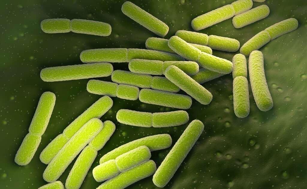 La bactérie Escherichia coli est responsable d'infections urinaires. © Tatiana Shepeleva, Fotolia