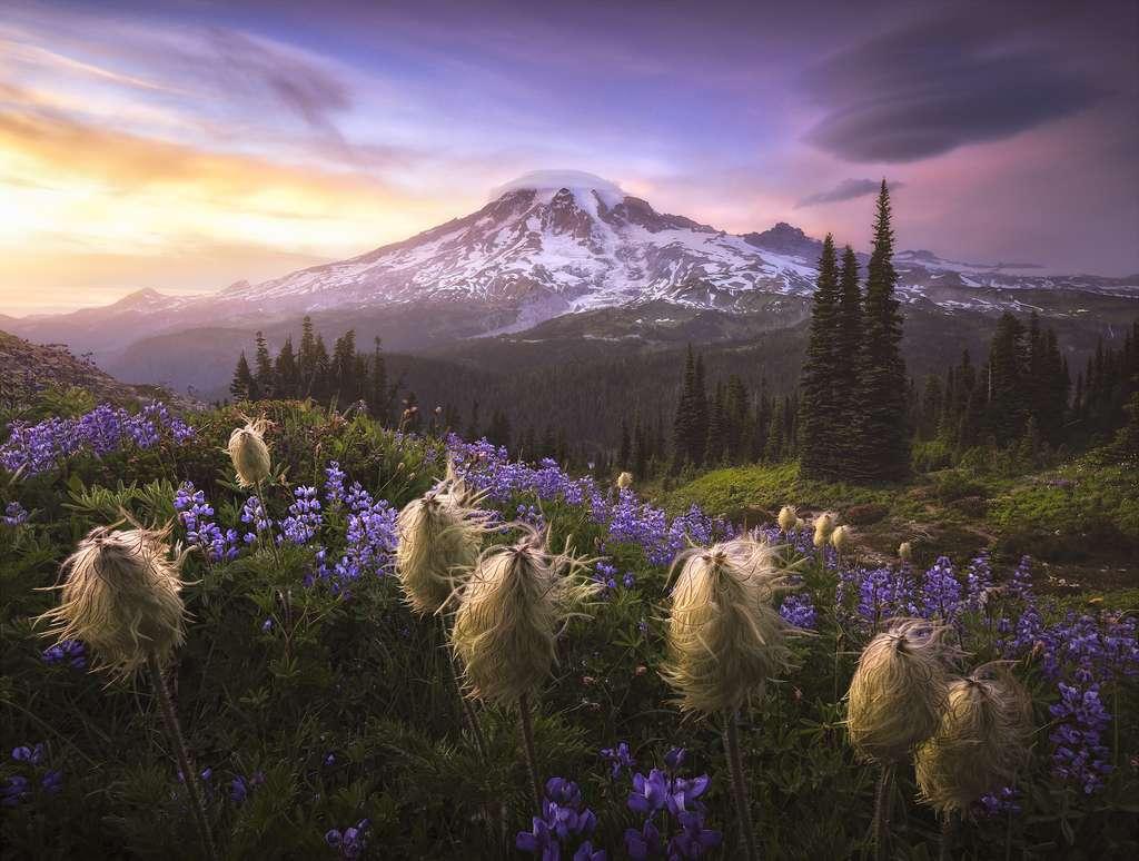 Vers l'au-delà, parc national du mont Rainier, Washington, États-unis