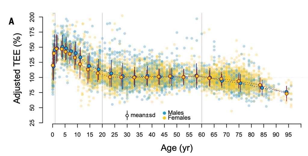 Dépense énergétique globale selon l'âge, corrigée en fonction du poids total et de la masse musculaire. © Herman Pontzer et al., Science, 2021