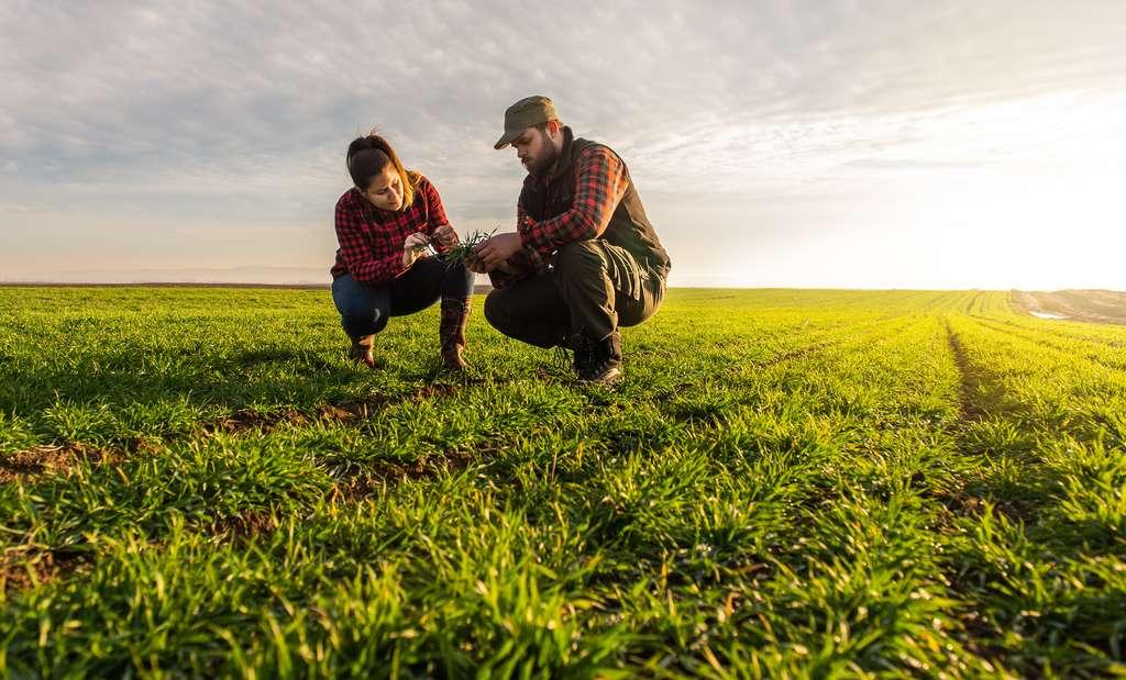 Chaque année, des milliers de jeunes sont séduits par le monde agricole. © Dusan Kostic, Adobe Stock