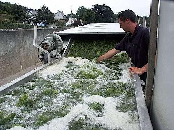 Traitement des algues vertes dans l'unité de production Morgane, à Bréhan (Morbihan), créée en 2009 par la société Olmix. Le financement est assuré par un partenariat public privé intégrant entre autres la Communauté des communes de Ploërmel, des coopératives agricoles de Bretagne, la Caisse des dépôts… © energiesdelamer.blogspot.com